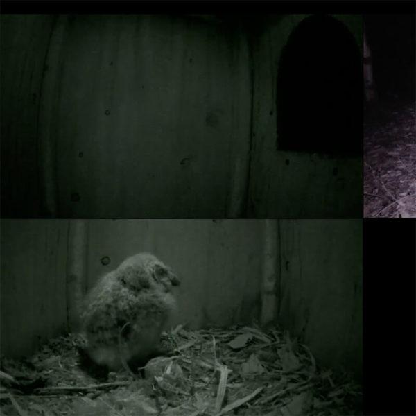 フクロウ巣箱のライブカメラ・長野県飯綱町