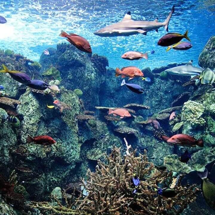 パラオのサンゴ礁を再現した水槽 アメリカカリフォルニア州のライブカメラ映像・観光