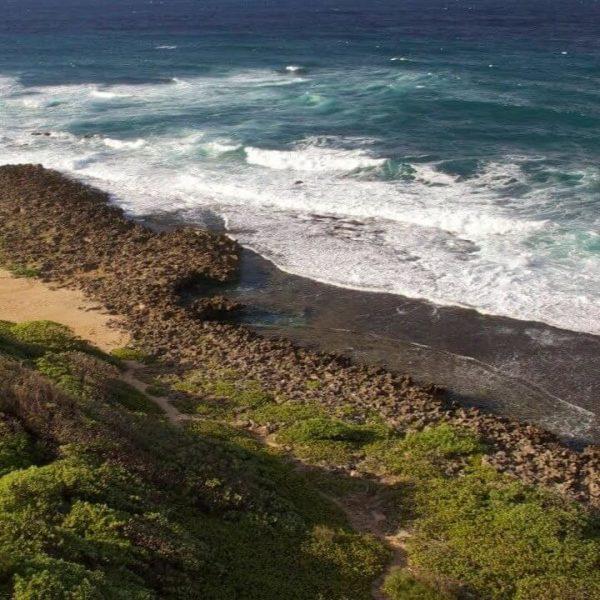 タートルベイ西海岸/Turtle Bay West|アメリカハワイ州の映像配信・観光