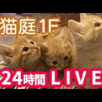 てしま旅館猫庭1Fのライブカメラ|山口県山口市
