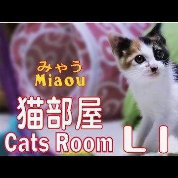 猫部屋のライブカメラ