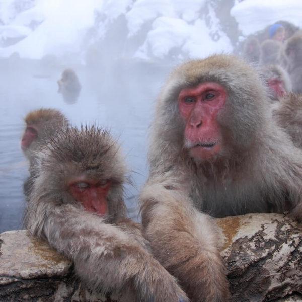 地獄谷温泉のライブカメラ・長野県山ノ内町