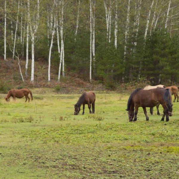 木曽馬の里のライブカメラ|長野県木曽郡木曽町