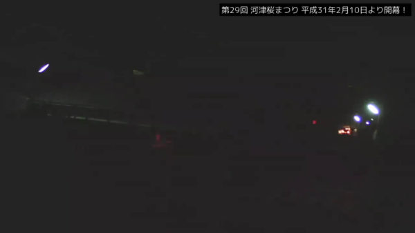 河津桜まつり河津桜原木のライブカメラ|静岡県河津町