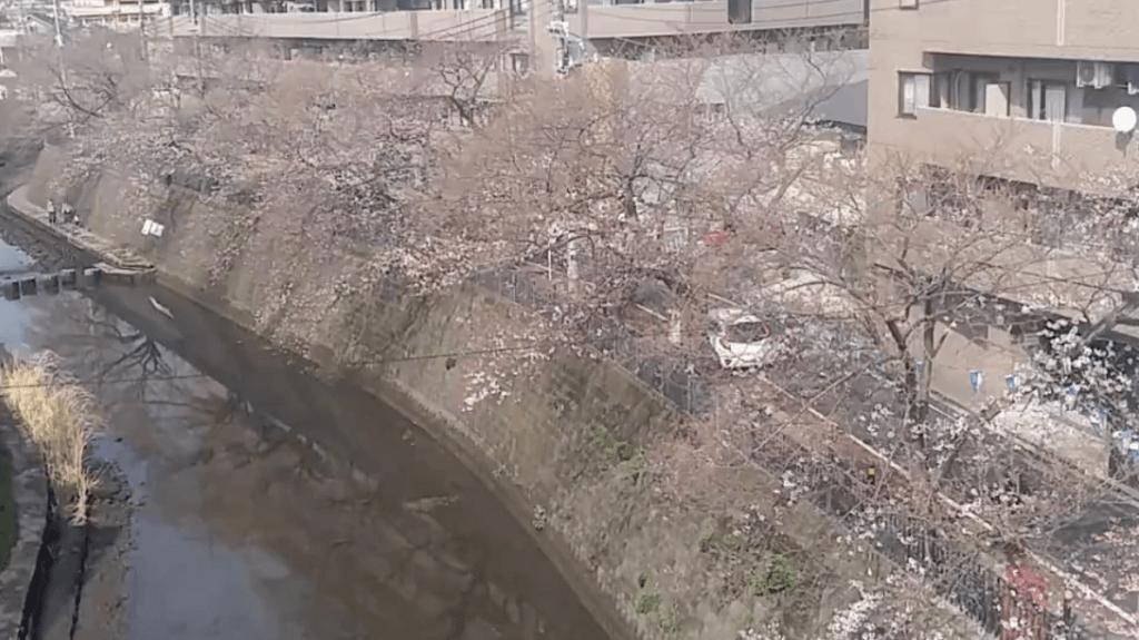 大岡川桜並木のライブカメラ(京急電鉄)|神奈川県横浜市