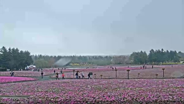 富士芝桜まつりのライブカメラ|山梨県富士河口湖町