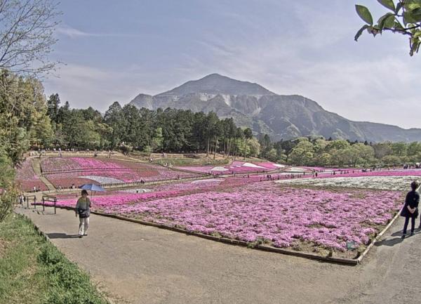 羊山公園・芝桜のライブカメラ|埼玉県秩父市