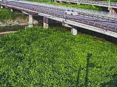 日野川 桐原橋のライブカメラ|滋賀県近江八幡市