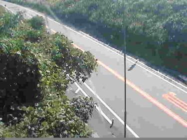 熊本県道28号 俵山トンネルのライブカメラ|熊本県南阿蘇村